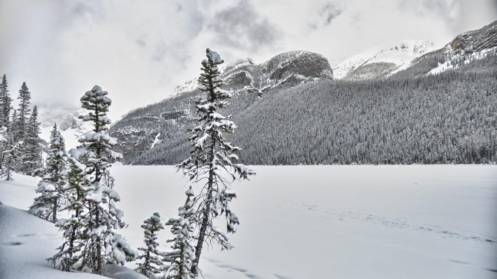 Le lac Louise encore gelé dans le parc national de Banff