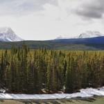 Vue sur la Bow River, la forêt et les Rocheuses en arrière plan - Banff National Parc
