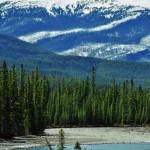Rivière turquoise, sapin verdoyant et sommets enneigés donnent un bon aperçu de la palette des couleurs des Rocheuses Canadiennes