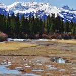 Une oie s'abreuvant tranquillement vers le Sundance Canyon