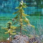 Tonalités de verts entre les sapins et les eaux du Grassi Lake
