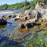 Rochers saillants à Botanical Beach - détroit Juan de la Fuca