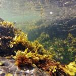 Sous l'eau, pas grand chose à part des algues
