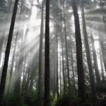 Lumière mystique et fantomatique sur la côte ouest de Vancouver Island, Canada