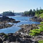 Les mousses tapissent les arbres de la forêt humide de la côte ouest de l'île de Vancouver