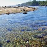 Une roche à l'apparence du sable... Botanical Beach - Vancouver Island