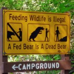 Non non et non ! On ne nourrira pas les ours