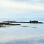 Un héron à la pêche - baie de Sooke - Colombie-Britannique, Canada