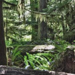 Une jungle humide qui nous rappelle l'Asie - Cathedral Grove, Canada