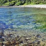 Botanical Beach dans le détroit Juan de la Fuca - Île de Vancouver