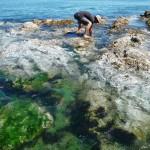 Pierre-Jean photographie la vie sous-marine... Côte ouest Vancouver Island