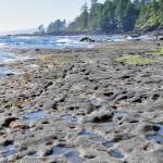 """""""plage de roche"""" à Botanical Beach, côte ouest de l'île de Vancouver"""