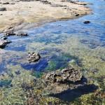 Rochers à fleur d'eau - Botanical Beach