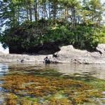 Ilot rocheux tel une forêt en suspension sur l'océan - Botanical Beach