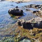 Rochers et trous d'eau de Botanical Beach - Canada