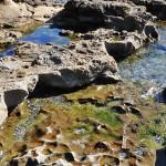 Tons verts - bleus à Botanical Beach, Colombie-Britannique