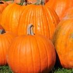 A l'approche d'Halloween, les courges sont de sortie - Canada